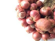Cebolas para o cozinheiro Foto de Stock Royalty Free