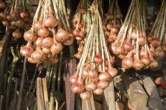 Cebolas que penduram para secar. fotografia de stock royalty free