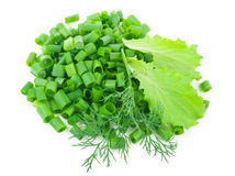 Cebolas verdes desbastadas com alface, aneto Imagem de Stock