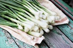 Cebolas verdes frescas Fotografia de Stock