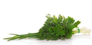 Cebolas verdes, salsa e o aneto Imagens de Stock