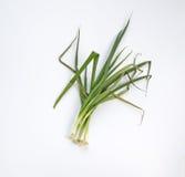 Cebolas verdes secas Foto de Stock
