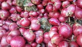 Cebolas vermelhas fotografia de stock royalty free