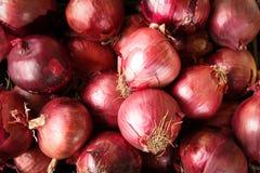 Cebolas vermelhas Imagens de Stock Royalty Free