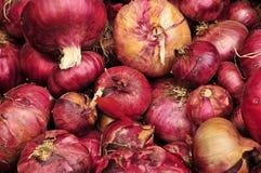Cebolas vermelhas italianas Imagem de Stock Royalty Free