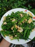 Cebolinha chinês/cebolinha de alho Imagens de Stock Royalty Free