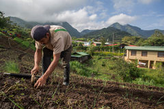 Cebolinha crescente do trabalhador em América Central Fotografia de Stock Royalty Free