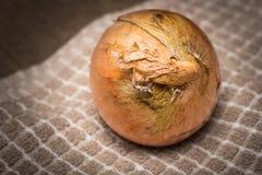 Cebolla amarilla Fotografía de archivo libre de regalías
