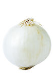 Cebolla blanca Imagen de archivo