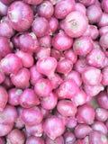 Cebolla de la cebolla o del bulbo o cebolla común Imagen de archivo libre de regalías