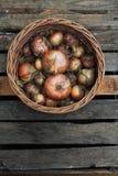 Cebolla de la cosecha en una cesta Imágenes de archivo libres de regalías