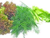 Cebolla de la lechuga del hinojo para la ensalada vegetal Imagenes de archivo