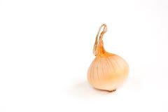 Cebolla fresca Imagen de archivo