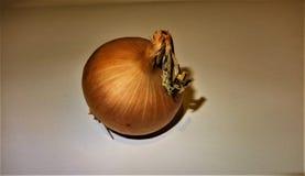 Cebolla fresca Foto de archivo