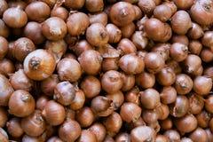 Cebolla fresca en el mercado Fotografía de archivo