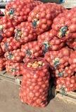 Cebolla fresca para la venta en el mercado agrícola Imágenes de archivo libres de regalías