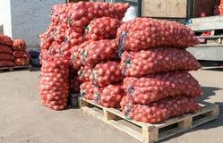 Cebolla fresca para la venta en el mercado agrícola Fotos de archivo libres de regalías