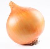 Cebolla madura Fotos de archivo