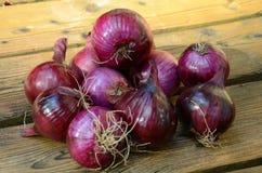Cebolla púrpura Imagenes de archivo