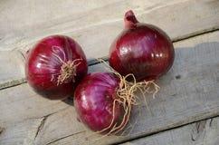 Cebolla púrpura Fotografía de archivo libre de regalías