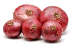 Cebolla roja Imagen de archivo