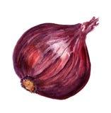 Cebolla roja ilustración del vector