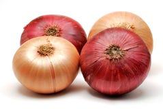 Cebolla roja y blanca Fotos de archivo libres de regalías