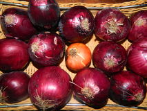 Cebolla vegetal púrpura brillante Imagen de archivo libre de regalías