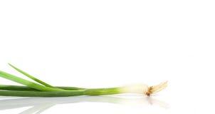 Cebolla verde Fotos de archivo