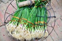 Cebolla verde con las cebolletas en cesta Imagenes de archivo