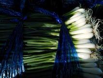 Cebolla verde, huerto, cocinero, verdura, huerto, jardín fotos de archivo