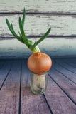 Cebolla verde que crece en un vidrio transparente en un fondo de tableros de madera Forma de vida simple Planta con la raíz Foto de archivo