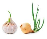 Cebolla y ajo de la germinación Fotos de archivo