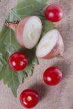 Cebolla y tomate crudos Fotos de archivo