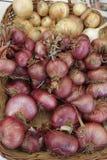 Cebollas Stockfoto