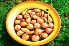 cebollas Imagen de archivo