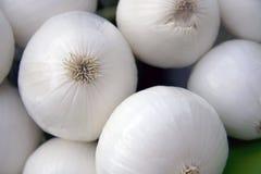 Cebollas blancas Fotos de archivo libres de regalías
