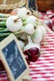 Cebollas blancas Imagen de archivo