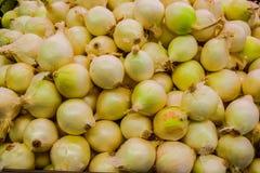 Cebollas blancas Imagen de archivo libre de regalías