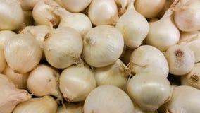 Cebollas blancas en compartimiento Fotografía de archivo