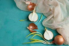 Cebollas brotadas en fondo de la turquesa Fotografía de archivo libre de regalías