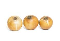 Cebollas de Brown aisladas en el fondo blanco Imagen de archivo