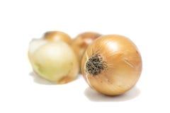 Cebollas de Brown aisladas en el fondo blanco Foco selectivo Fotografía de archivo