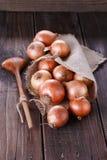Cebollas de Brown en un fondo de madera oscuro rústico Imagenes de archivo