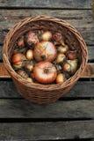 Cebollas de la cosecha en la cesta de mimbre Imagen de archivo libre de regalías