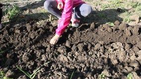 Cebollas de la planta de los niños en el jardín metrajes