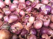 Cebollas de los chalotes Fotografía de archivo