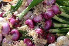 Cebollas del mercado fresco Foto de archivo libre de regalías