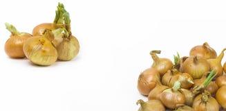 Cebollas en el fondo blanco Foto de archivo