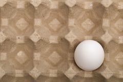 Cebollas en el fondo blanco Foto de archivo libre de regalías